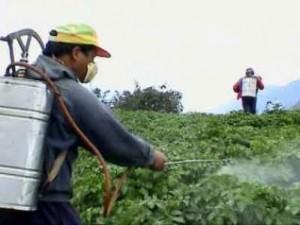 محاصيل زراعية مصرية بالمبيدات