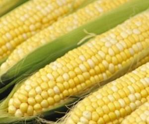 الذرة الصفراء