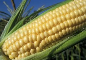 الوطنية للذرة