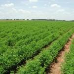 الحاصلات الزراعية ,, أرشيفية