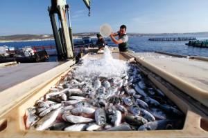 الثروة السمكية