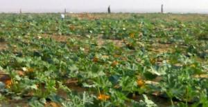 أراض الاستصلاح الزراعى