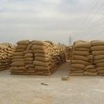 شون القمح