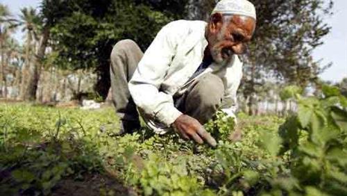 الدولية للمحاصيل الزراعية