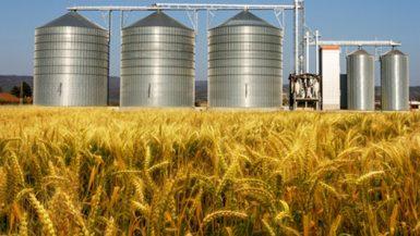 صوامع القمح