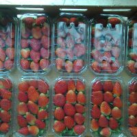 تصدير الفراولة