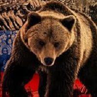 الدب الروسى