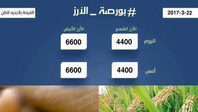 اسعار الارز اليوم