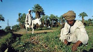 التأمينات الزراعية