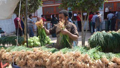 محلات الفسيخ والرنجة فى شم النسيم (3)