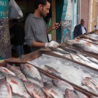 أسعار الأسماك