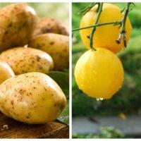 صادرات الموالح والبطاطس فى 2017
