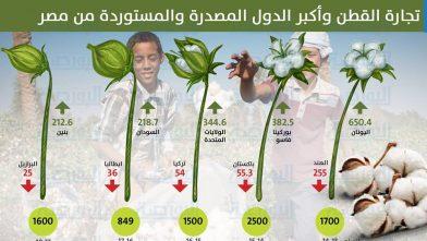 انفوجراف تجارة القطن فى مصر