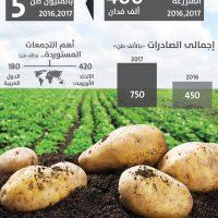 انفوجراف زراعة البطاطس في مصر
