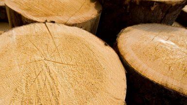 الأخشاب