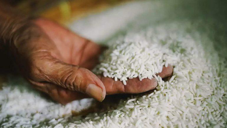 الأرز ؛ أرز