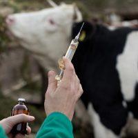 اللقاحات و الأدوية البيطرية